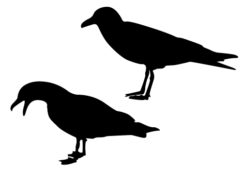 Seagull Silhouette Vector Free Download Get PNG, JPEG, EPS ...