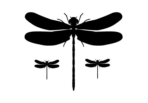 dragonfly silhouette vector free download dragonfly vectors rh silhouettevectorstock com dragonfly vector drawing dragonfly vector free download