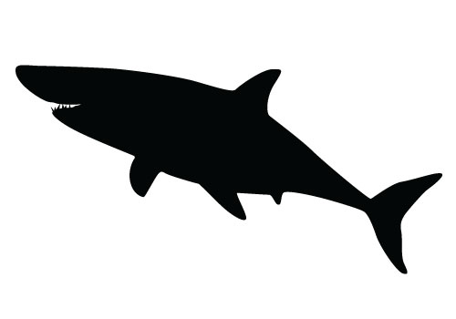 Shark Vector Graphics